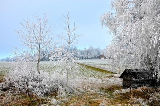 Winterwunderland1
