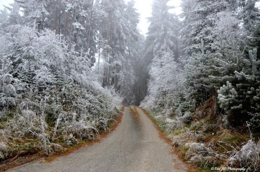 Winterwunderland4