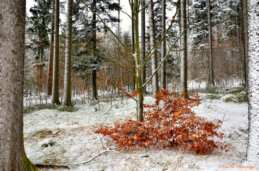 Winterwald4