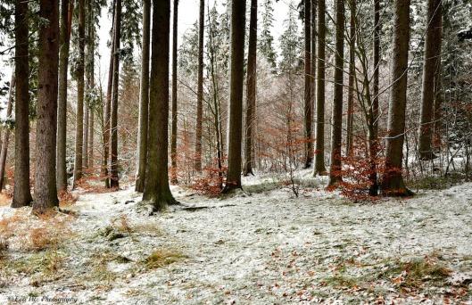 Winterwald5