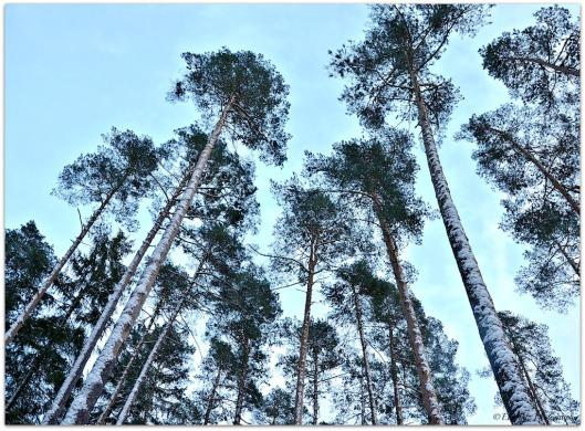 Winterbäume
