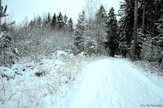 Wintertraum6
