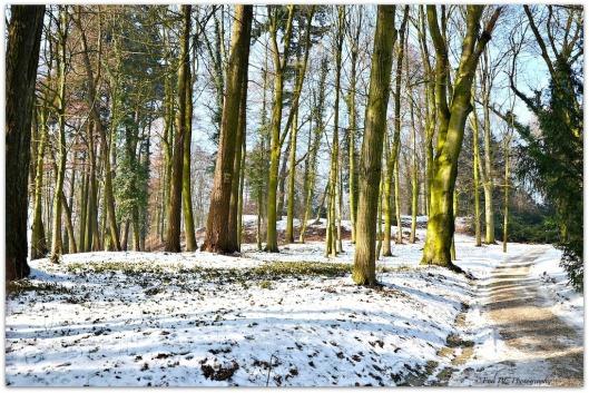 frühlingshafter Winterspaziergang