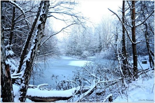 Winterteich6