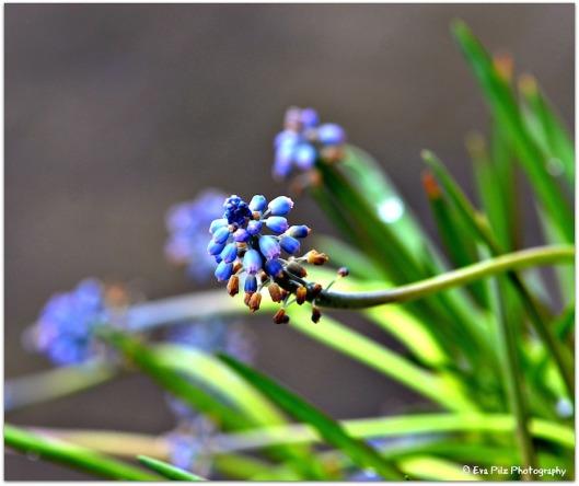frühlingsblau