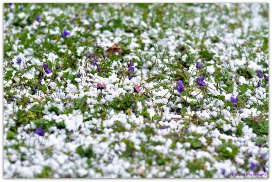 Frühlingswiese1