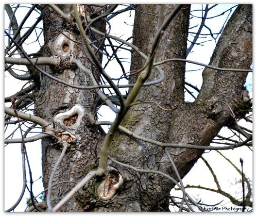 Herz am Baum6