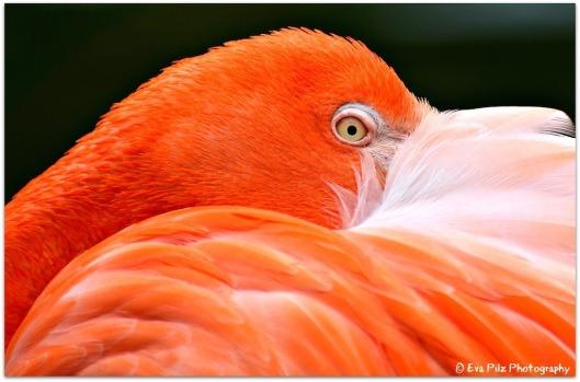 roter Flamingo