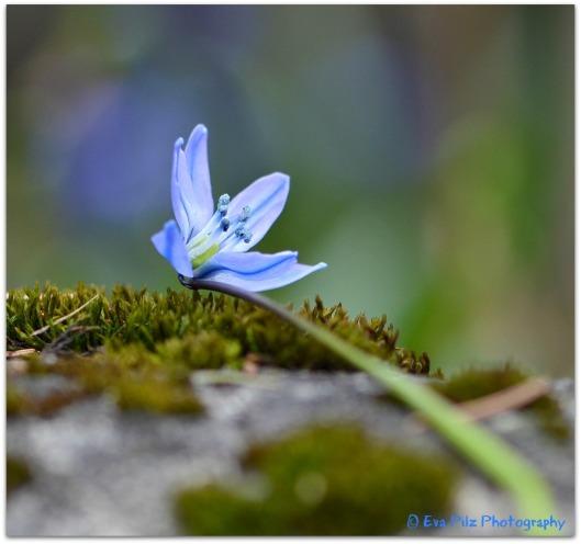 Blausternchen5