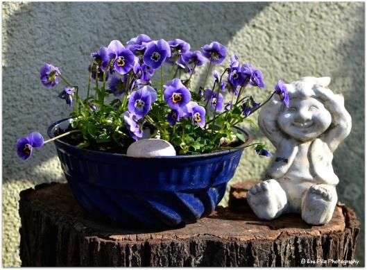 Frühlingsstrahlen