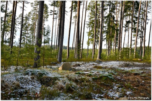 Osterwald mit Schnee