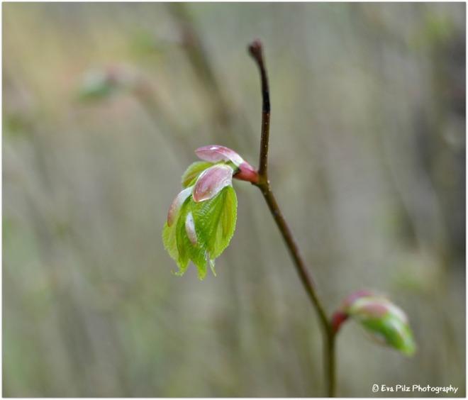 Frühlingsblatt