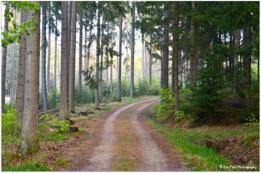 Waldspaziergang7