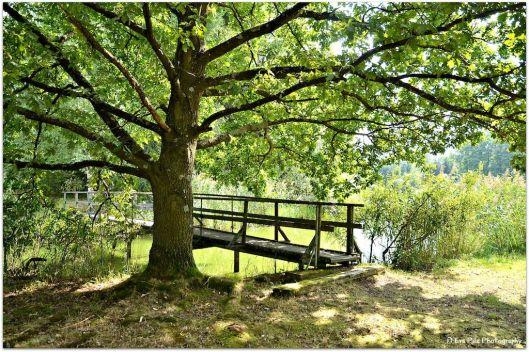 Brücke Mitterteich