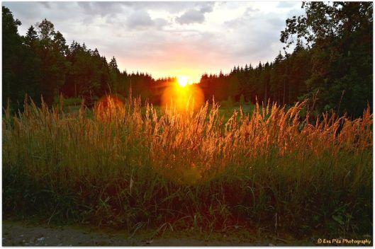 goldiger Sonnenuntergang