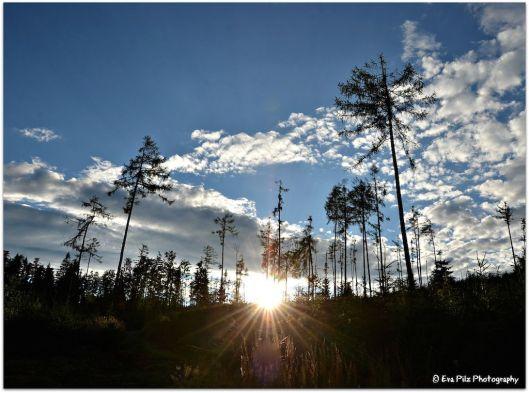 Sonnenuntergang Wald4