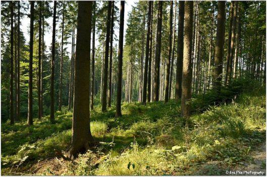 Waldduft1