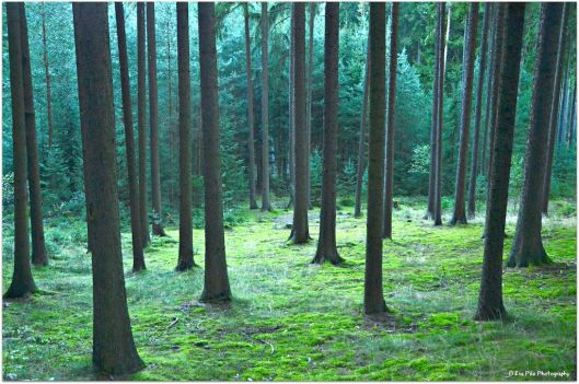 Waldstimmung5