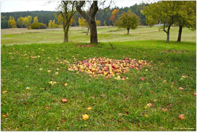 Äpfel8