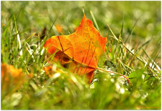 Herbstblatt12