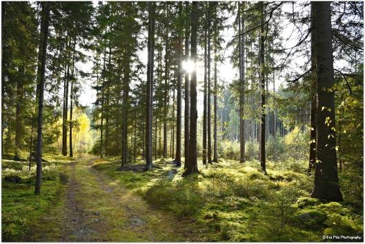 herbstlicher Märchenwald