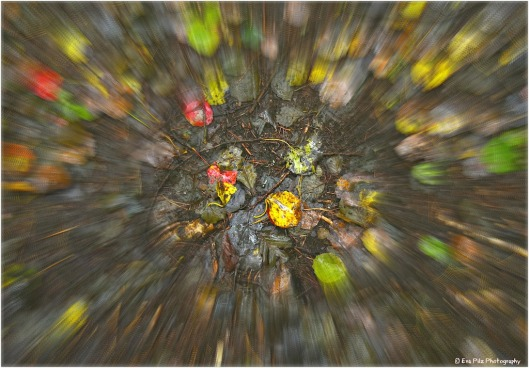 Herbstmalerei3