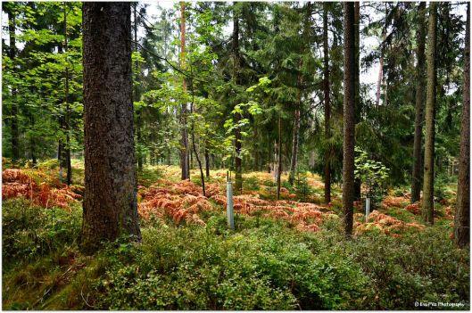 Herbstwald9