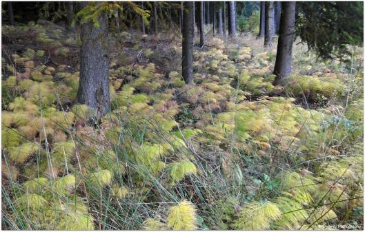 Waldboden4