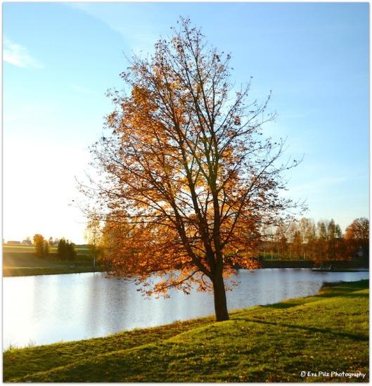 Herbstbaum am Teich