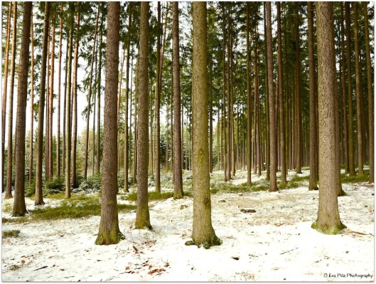 Ludwigsthal Wald.jpg