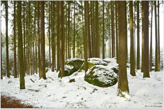 Wald Ludwigsthal.jpg