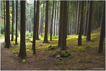 Waldsicht11
