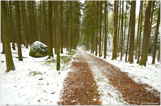 Winter Ludwigsthal1.jpg