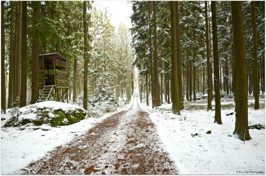 Winterwald Ludwigsthal.jpg