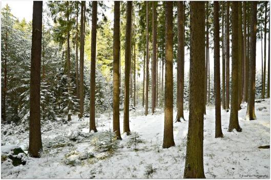 Winterwald Ludwigsthal1