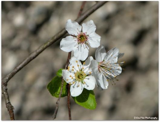 Frühlingsblüte.jpg
