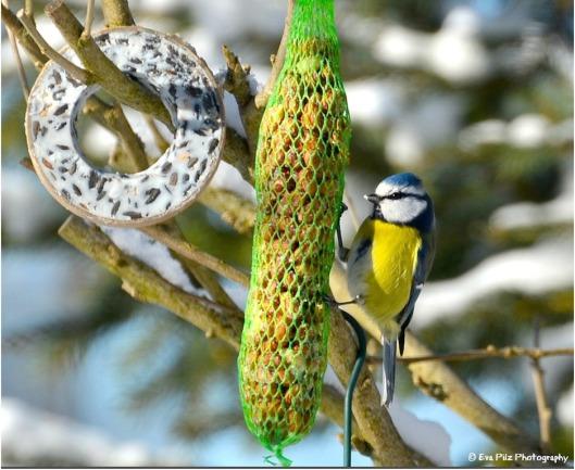 Vogelfrühstück