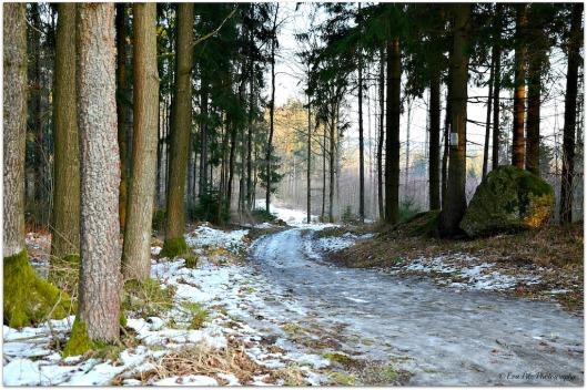 Waldweg6.jpg