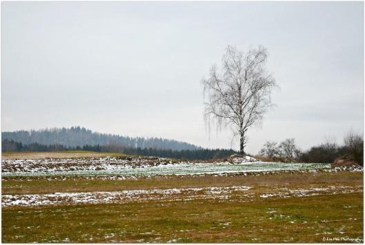 Winterbirke3