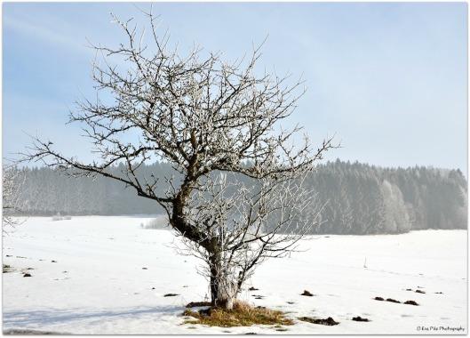 Winterfreude.jpg