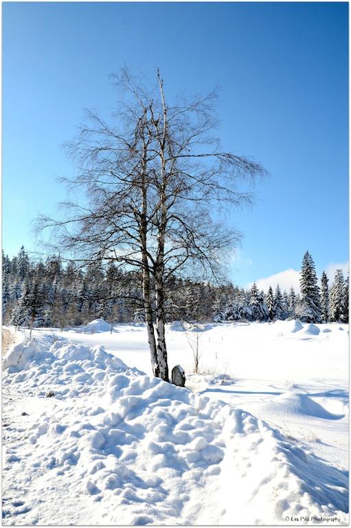 Winterpracht5.jpg