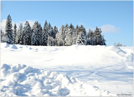 Winterpracht8.jpg