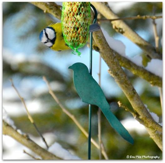 Wintervogelzählung