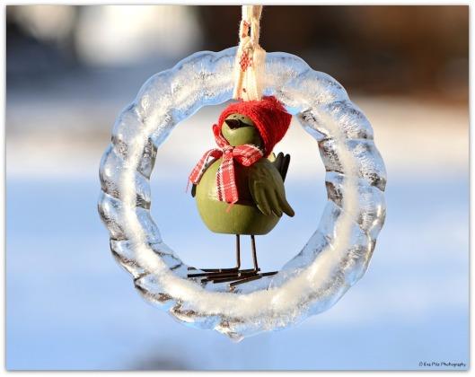 Wintervogelzählung1