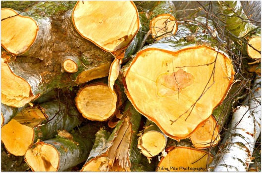 Herz Birkenholz.jpg