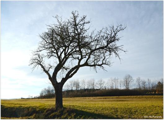 mein Freund der Baum.jpg