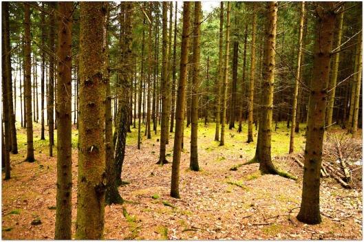 Wald im Jänner.jpg