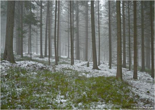 Winterwald im Feb er