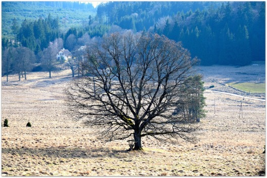 Baum - Nebelstein.jpg