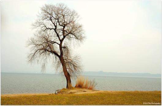 einsamer Baum5